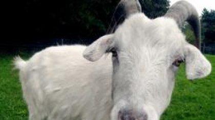 Goat Simulator - почувствуйте себя козлом!