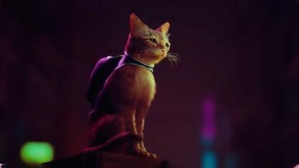 Игра Stray принесет киберпанк, роботов и кошек на PS5 в 2021 году